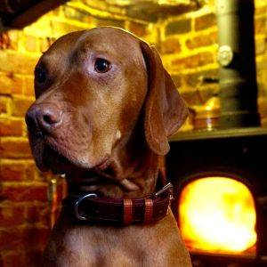 Chelsea Dog Collar Caramel/Tan