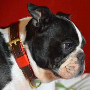 Pimlico Dog Collar Chocolate/Red