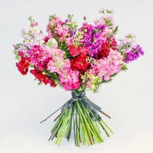 Stocks Delight Bouquet